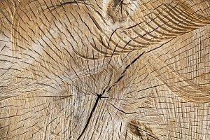 trunks birch sawn