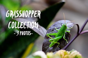 Grasshopper Collection