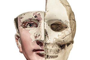 Anatomy Human Head Model Isolated