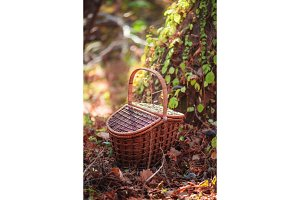 Picnic basket in an autumn forest in