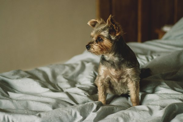 Animal Stock Photos: René Jordaan Photography - Puppy Sitting on a Comfy Bed