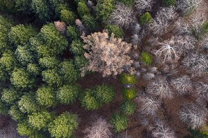 Aerial view of the coniferous autumn