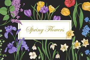 Blooming spring flowers