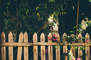 Wooden fencing of cozy courtyard