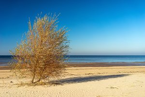 Tree with shadow on a sandy beach