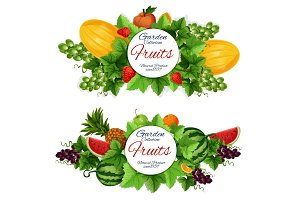 Harvest and garden fruits, vector