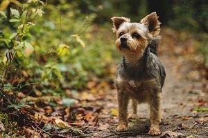 Sweet Puppy Walking in the Woods