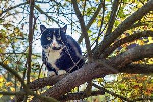Black Cat sitting on the tree