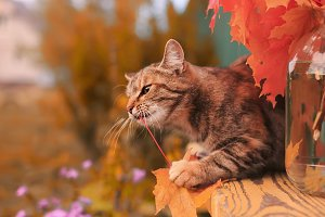 cat in autumn garden