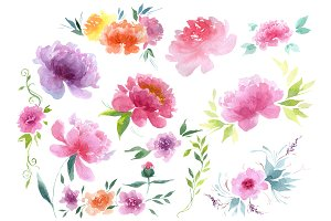 Delicate colorful peony PNG set