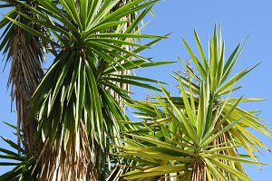 Green palm trees and blue sky