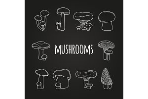 White line mushrooms on blackboard