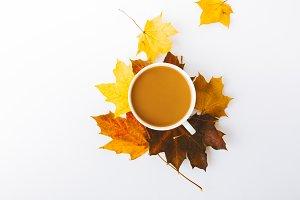Autumn flat lay background on white