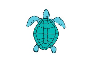 Sea Turtle Swimming Drawing