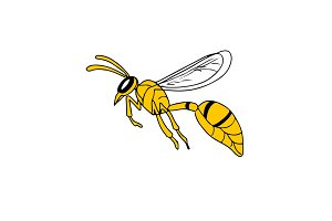 Wasp Flying Drawing