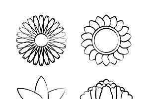 blooming flower drawing vector set