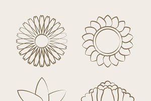 blooming flower drawing vector set