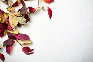 Red Autumn Leaves on White Concrete