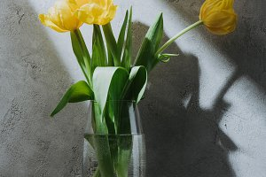 yellow spring bouquet of tulips in g