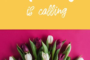 top view of fresh spring tulips with