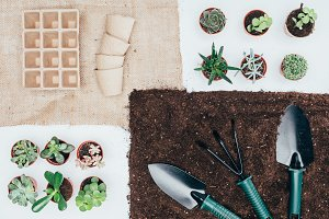 top view of green potted plants, emp