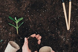 cropped shot of person holding soil
