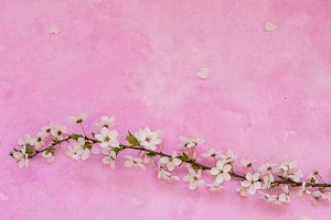 Cherry flowers on cement