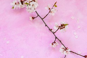 Apricot flowers on cement