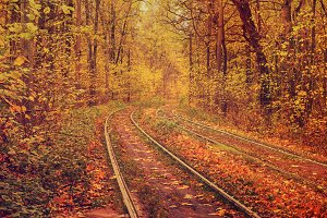 Rails in the forest