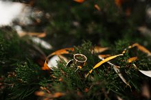 Wedding rings on pine needles at win by  in People