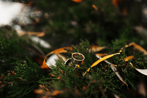 People Stock Photos: AS photostudio - Wedding rings on pine needles at win