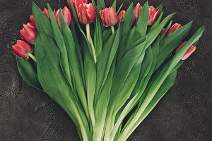 top view of beautiful red tulip flow