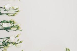 beautiful white eustoma flowers on g