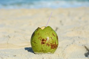Coconut placed by the sea.