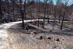 Walking through a burned forest