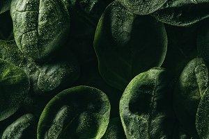 dark floral background with fresh gr