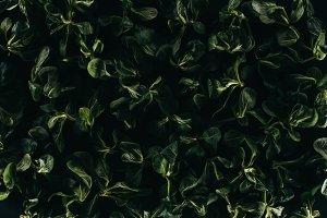 beautiful fresh green leaves, dark f