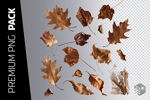 16 AUTUMN LEAVES PNG IMAGES