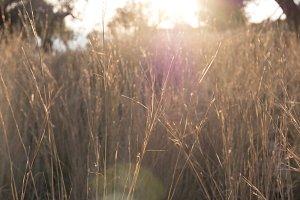 Sun flare in the grass