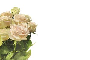 Rose Flower bouquet background.