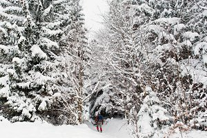 Man at pine trees covered by snow at