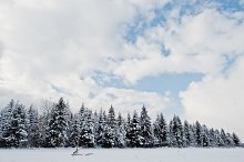 Pine trees covered by snow. Beautifu by  in Nature