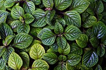 green mint texture, spicy grass by  in Nature