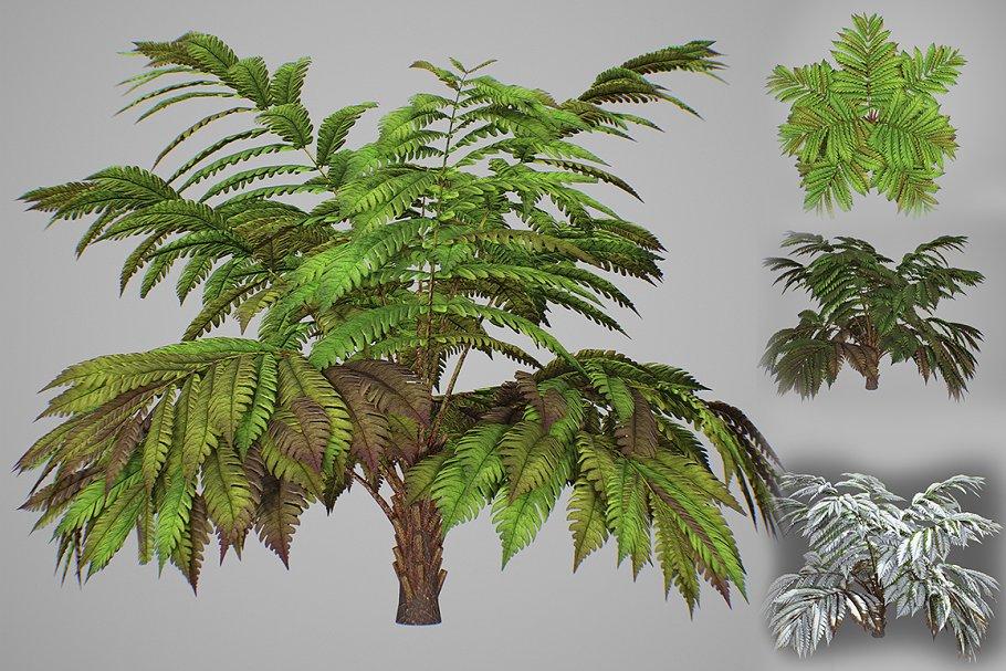 Alsophila fern averahe HIGH