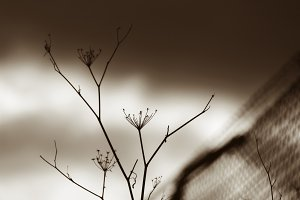 dried plants outside the wire fence