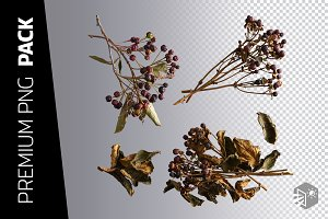 4 DRIED BERRY BRANCHES PNG IMAGES