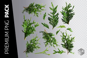 14 CEDAR BRANCHES PNG IMAGES