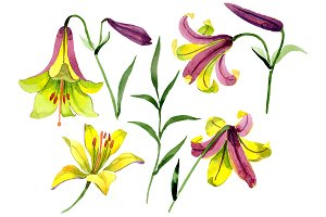 Wildflower lemon lily PNG watercolor