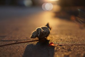 autumn traffic