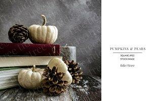 Pumpkins & Pears | Square No 5